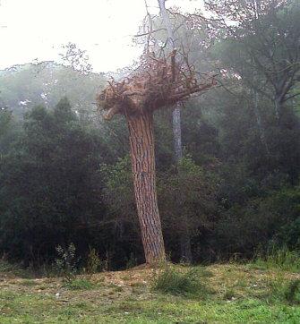 """exemplar de """"erbra"""" (arbre al revés)"""